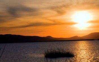 Liberan crías y alevines de tilapia (Oreochromis sp) para fortalecer pesquería en el lago de Cuitzeo