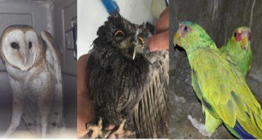 Rescatan 48 organismos silvestres en el Estado de México