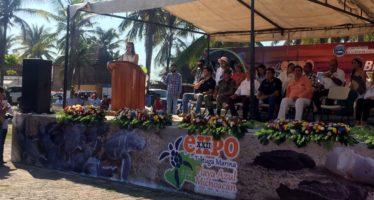 Michoacán es ejemplo de protección y conservación de tortuga marina en México
