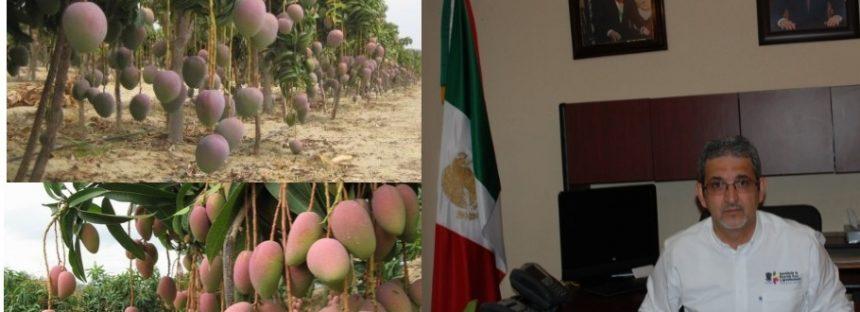 Michoacán, primer lugar nacional en exportación de mango: Sedrua