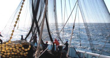 Inicia México veda de túnidos en el Océano Pacífico