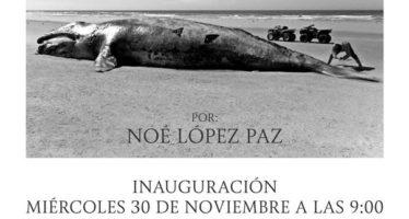 Cementerio de Gigantes, exposición fotográfica Noé López Paz en la Reserva El Vizcaíno