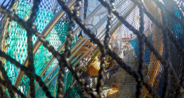 Logra México meta sexenal de consumo de pescados y mariscos: 12 kg por persona al año