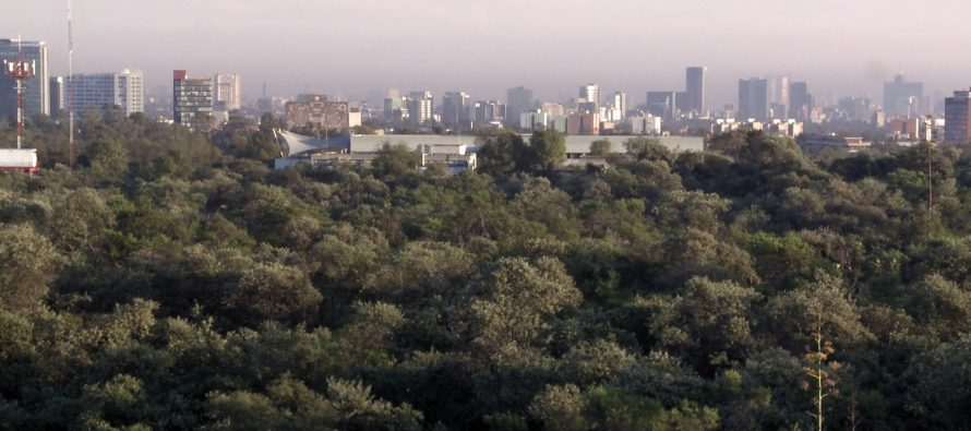 Flora y fauna exótica ponen en riesgo biodiversidad del Pedregal de San Ángel en la CDMX