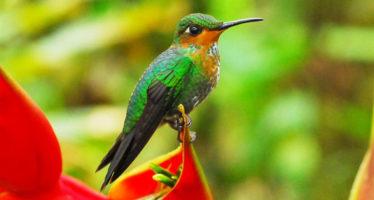 Inicia en Cancún la Conferencia de la ONU sobre Biodiversidad.