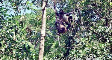Unen esfuerzos Quintana Roo, Yucatán y Campeche para desarrollo sustentable
