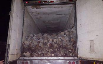 26.7 Toneladas de palmilla del desierto y una caja de tractocamión fueron decomisados en Baja California