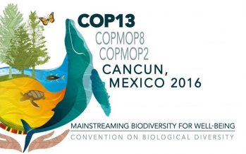 COP 13: El sector privado se compromete con la biodiversidad en sus operaciones