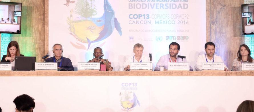 México es reconocido como líder en protección de áreas marinas ante la ONU