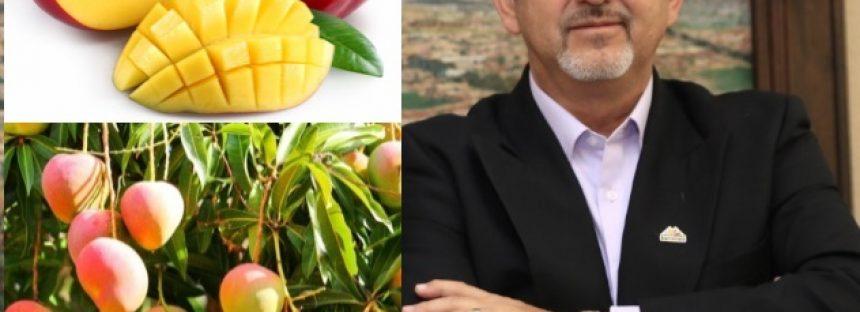 Más de 3 mil 250 hectáreas de mango certificadas para exportar
