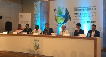 Líderes ambientales reciben el premio Campeones de la Tierra por la ONU