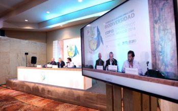 Fortalecen agenda de integración de biodiversidad en sectores económicos en la COP13