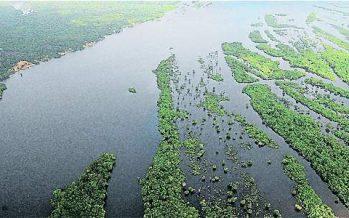 Deforestación de la Amazonía brasileña creció 29% en el último año.