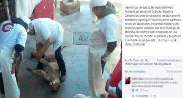 Puma destazado en una carnicería de Monclova, Coahuila