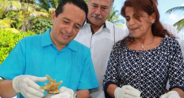 Para repoblamiento, en Quintana Roo, pretende crear 260 mil colonias de coral en cinco años