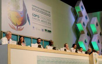 Clave del desarrollo sustentable: Equilibrio entre producción y conservación de la biodiversidad.