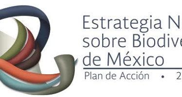 México como centro de políticas públicas en materia de biodiversidad