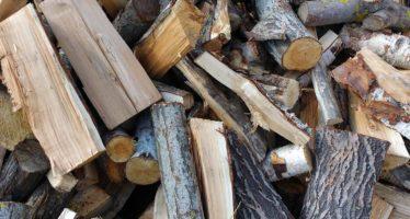 Se decomisan 15.7 metros cúbicos de madera de Pino y Banak en puebla