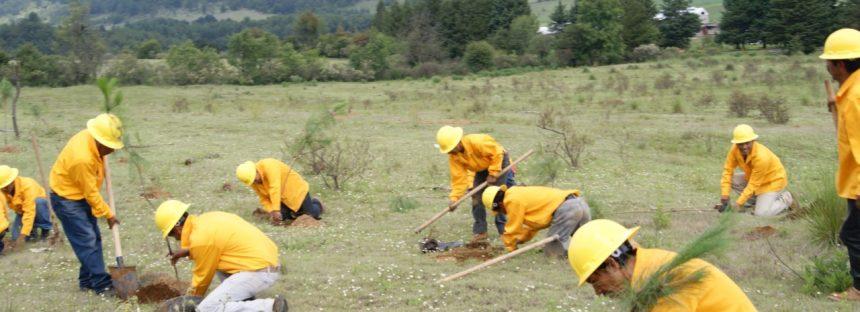 Nahuatzen, Michoacán, recibió 116 mil árboles de pino a través del Programa Integral de Reforestación