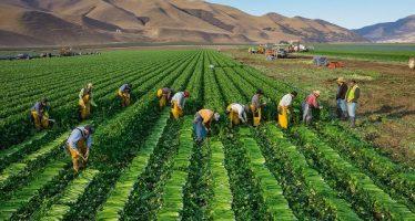 Programa para trabajadores agrícolas México-Canadá beneficiará más de 1,500 michoacanos