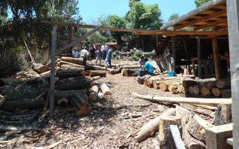 Más de 301 millones de pesos fueron invertidos en 2016 en Sector Forestal de Michoacán