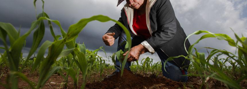 Publican reglas de operación para el sector agroalimentario para el 2017
