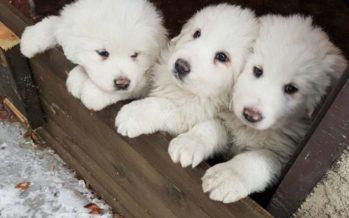 Tres cachorros rescatados en el hotel sepultado por la nieve en Italia