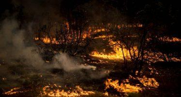 Chile sufre los peores incendios forestales en décadas
