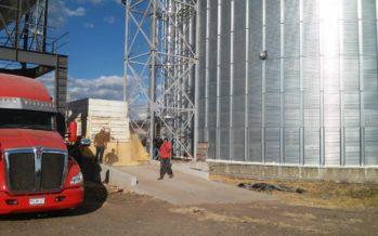 Cerca de 20 mil toneladas de granos de maíz son resguardadas en centros de acopio de Asteca