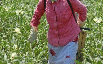 Más de 49 mil beneficiados en el país por el programa Atención a Jornaleros Agrícolas