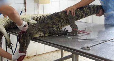 El vídeo que evidencia la crueldad Louis Vuitton y el asesinato de cocodrilos (Imágenes fuertes)