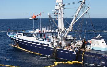 Inicia hoy temporada de captura de atunes en el Océano Pacífico