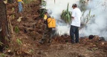 Prevención de incendios forestales se fortalecerá este 2017