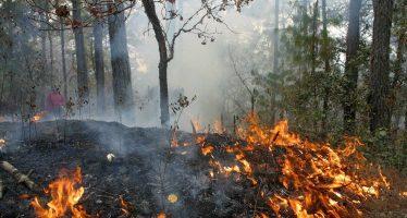 Incendios forestales en la sierra costa, COFOM realiza acciones de prevención