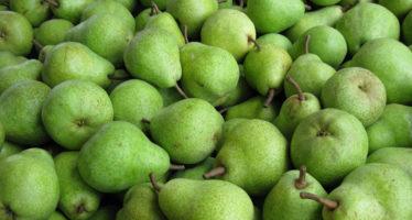 Michoacán se posiciona como segundo productor nacional de pera