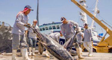 Captura histórica de atún en aguas sudamericanas, logran buques mexicanos de la empresa GRUPOMAR