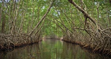 """Presentan la obra """"Manglares de México"""", información histórica sobre los manglares en el país"""