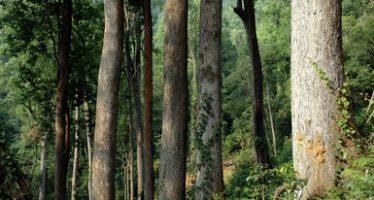 ANPs de México resguardan 13 por ciento de bosques nacionales