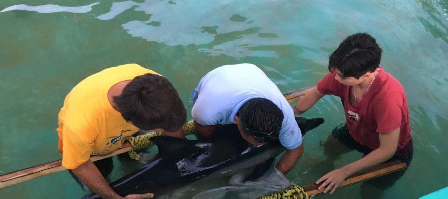 Liberan delfín (Delphinus delphi) varado en las playas de Zicatela, Puerto Escondido, Oaxaca