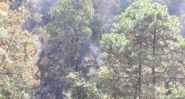 CONTROLADO, EL INCENDIO FORESTAL EN EL CERRO DE LA CRUZ: COFOM