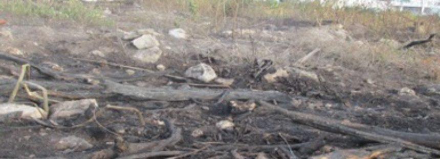 Imprudencial, el incendio en el malecón Tajamar de Cancún, asegura Profepa
