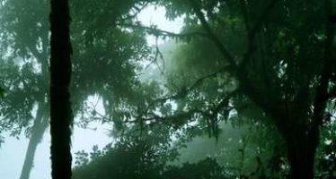 La Reserva de la Biosfera El triunfo en Chiapas, cumplió 27 años como ejemplo de conservación y sustentabilidad