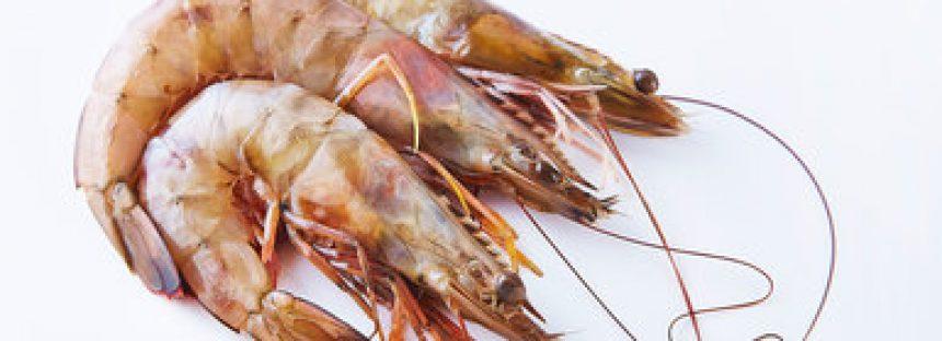 Inicia veda para tres especies de camarón en el Pacífico