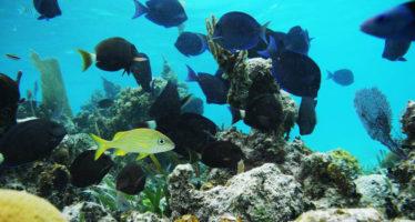 En México, disponibles para el turismo, 181 áreas naturales protegidas