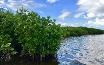 Restauran Sitio Ramsar Manglares de Nichupté en Quintana Roo