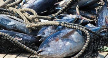 El fallo de la OMC contra EUA, es una victoria para la sustentabilidad de la pesca de atún en México: CONAPESCA