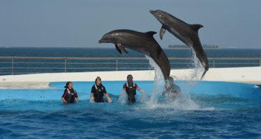 El gobierno de México no ha otorgado permisos para la captura de delfines en los últimos 4 años