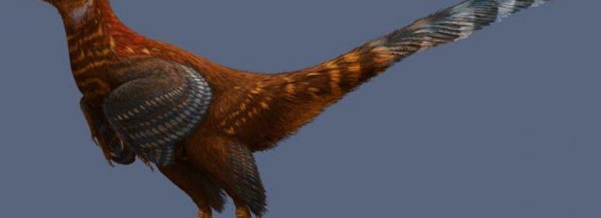 Un «pollo» gigante y con dientes, el nuevo dinosaurio del Cretácico