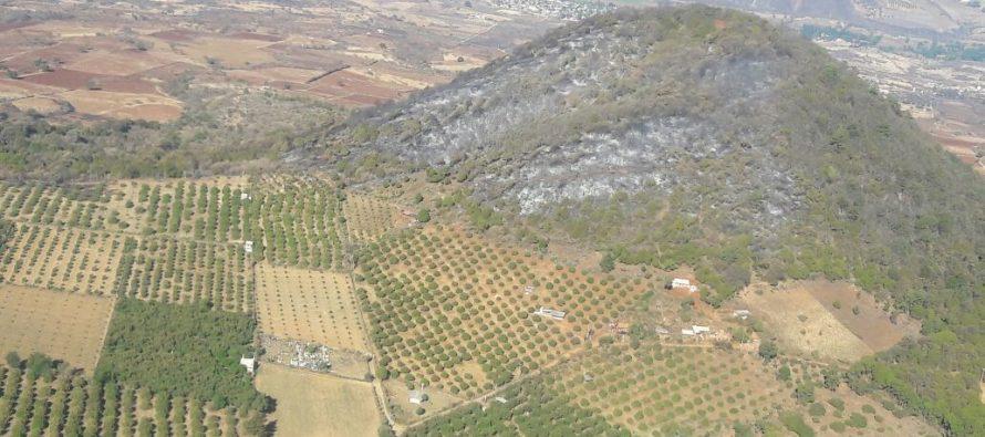 Cofom hace valer la Ley de Desarrollo Forestal Sustentable de Michoacán