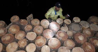 Firme la estrategia contra talamontes en Michoacán